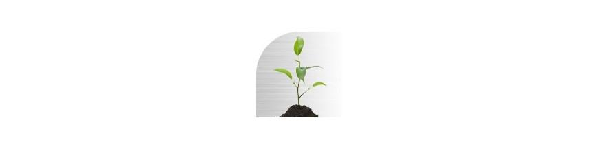 Stimulateur de croissance